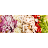 Disc Collection | Vegetable Prep Machines | Equipment